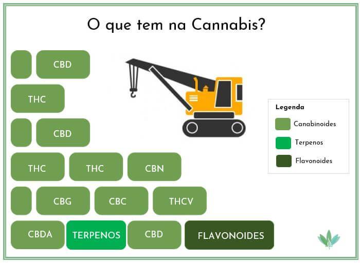 Canabinoides presentes na Cannabis