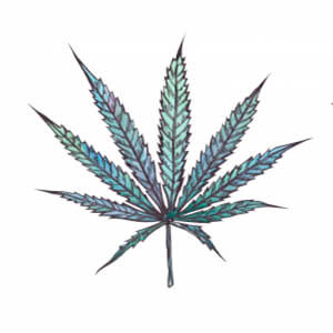 Tipos de cannabis - Blog - Arte - sativa