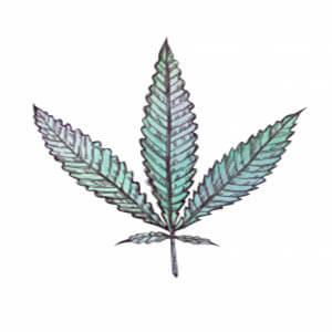Tipos de cannabis - Blog - Arte - ruderalis