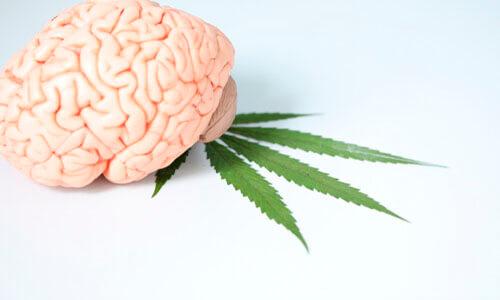 10 artigos científicos sobre sistema endocanabinoide