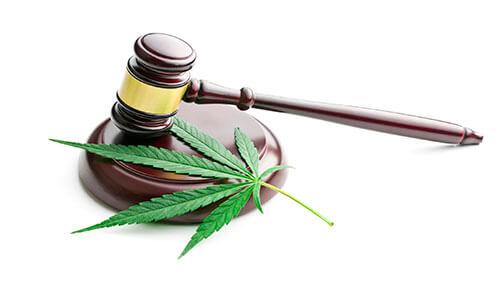 Senado-discute-cultivo-de cannabis-para-fins-medicinais