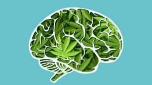 Conheça a anandamida: o THC que o seu corpo produz