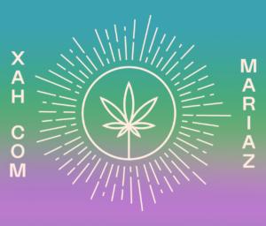 Colaboração entre Xah com Mariaz e Dr. Cannabis - Conheça tudo sobre o primeiro registro da cannabis para tratar dor menstrual